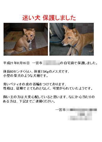 迷い犬-1.jpg